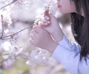 cherry blossom, girl, and 桜 image