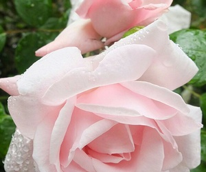 rose and fleur image