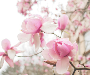 beautiful, blossom, and flores image