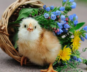 flowers, bird, and Chick image