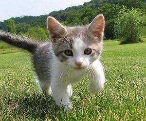 kitten, cat, and lovely image