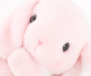 pink, cute, and bunny image