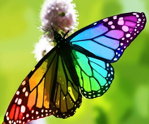 butterfly, colorful, and rainbow image