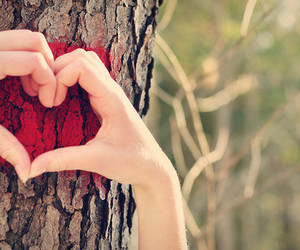 heart, love, and tree image