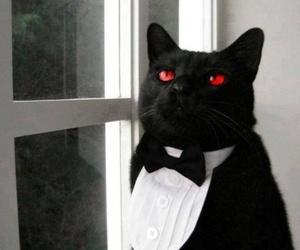 cat, kuroshitsuji, and black butler image