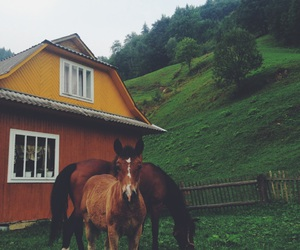 horses, village, and the mountains image