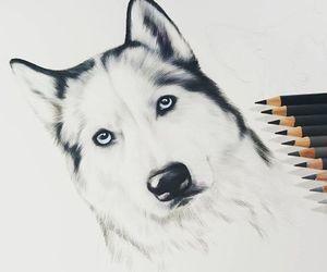 art and husky image