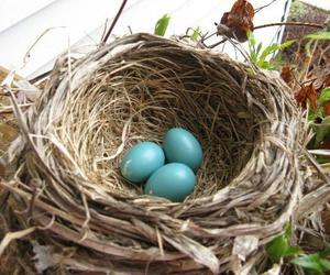 beige, bird, and bird nest image