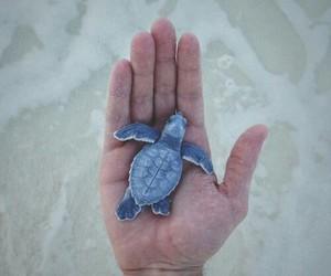 animal, blue, and turtle image