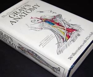 medicine and anatomy image