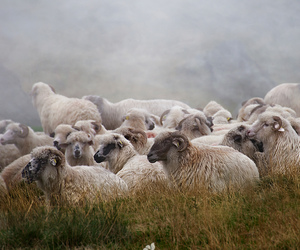 aries, lamb, and mist image