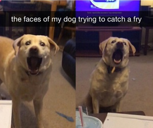 dog, fries, and funny image