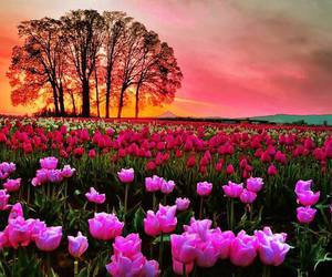 beautiful, red, and flowers image