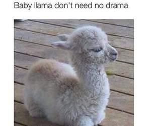 drama, llama, and funny image