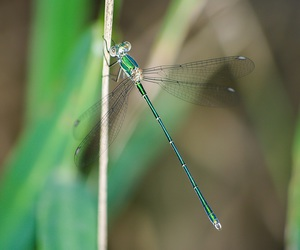 bug, dragonfly, and green image