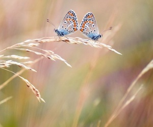 butterflies, flowers, and the the willows image