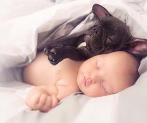 baby, french bulldog, and morning image