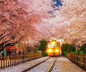 train, south korea, and flowers image