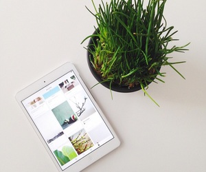 minimalist, morning, and plant image