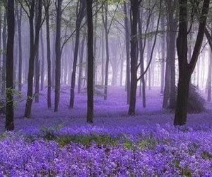 forest, purple, and flowers image