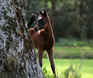 bay, foal, and cute image