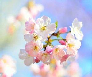 pastels, spring, and burst of buds image