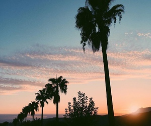 palm trees, sunset, and sky image