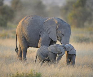 best friends, elefantes, and hermosos image
