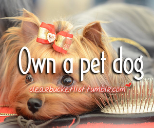 before i die, bow, and dog image