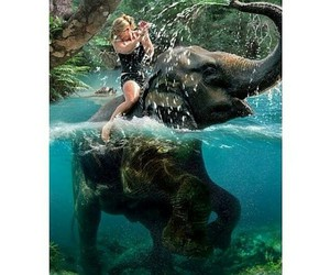 animal, elephant, and girl image