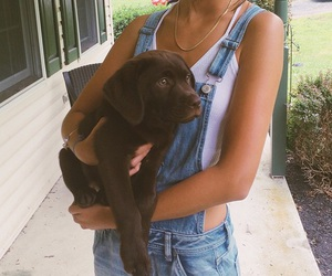 tan, dungaree, and puppy image