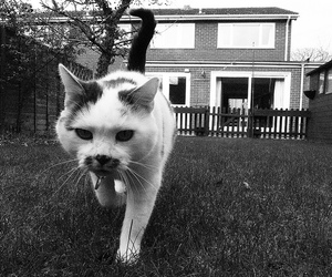 black and white, cat, and film grain image