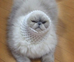 cat, funny, and cupcake image