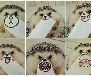 cute, animal, and funny image