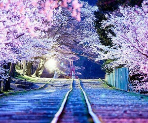 tree, flowers, and japan image