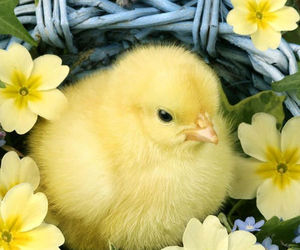easter, spring, and animal image