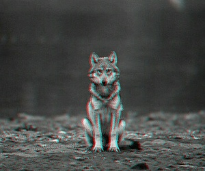 alone, black, and wolf image