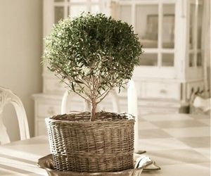 centerpiece, bonsai tree, and omega decor image