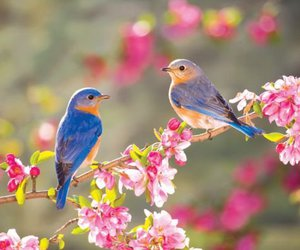 bird, spring, and flowers image