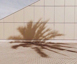 brown, theme, and palm tree image