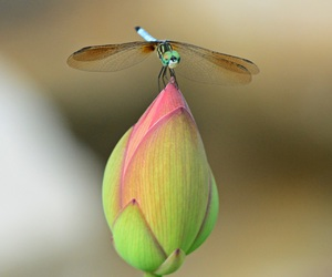 dragonfly and flowers image