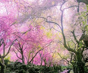 pink, nature, and Central Park image