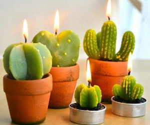 cactus, candle, and green image