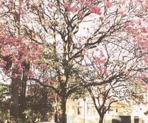 car, cherry blossom, and nature image