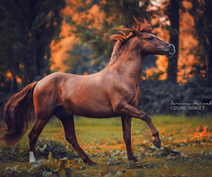 horse, animal, and autumn image