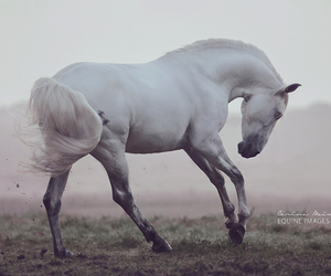 free, proud, and horse image