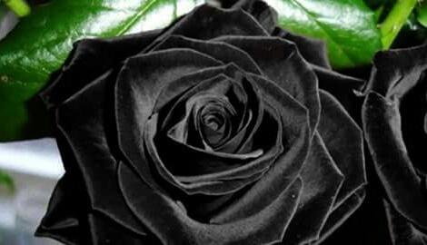 λουλουδια image