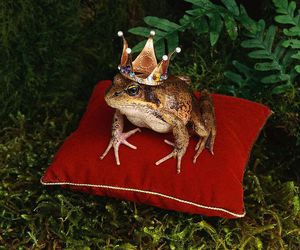 fairytale and frog image