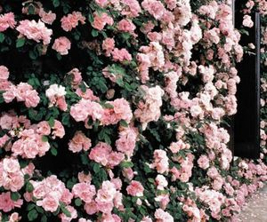 aesthetic, flower, and inspo image