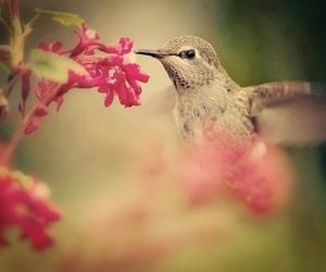 animal, colibri, and fauna image